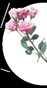 Rose Hintergrund