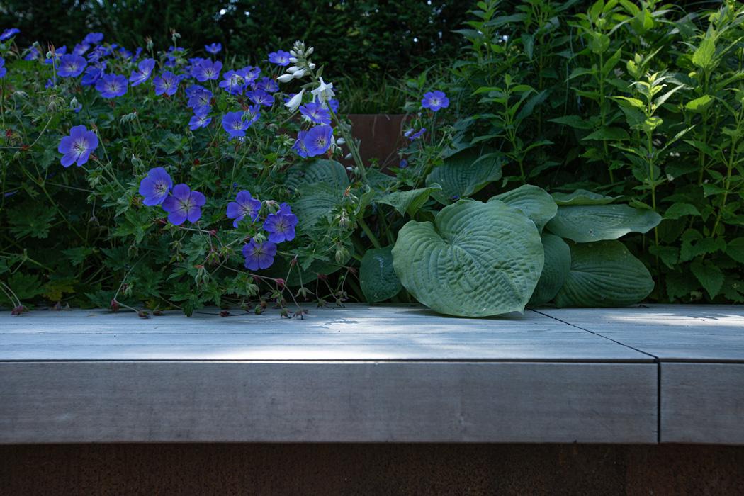 blaue-Blüten-am-Poolrand